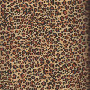 1539-Safari-leopard-Makover.jpeg